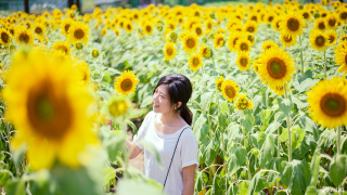Six Spots To Enjoy Beautiful Bright Sunflowers In Japan