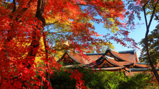 ☙ Fall Foliage 2019 ❧ Kansai - The Maple-Filled Kitano Tenmangu Shrine of Kyoto