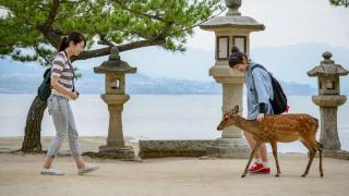 가을 일본여행! 단풍과 사슴이 있는 미야지마 섬
