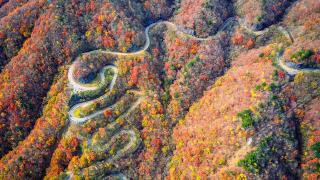 일본 가을 렌트카여행 명소 추천! 48개의 커브가 있는 드라이브 명소 '이로하자카'