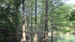 마치 지브리의 숲에 들어온 것만 같은 곳. 규슈 대학교 숲 사사구리큐다이노모리(篠栗九大の森)