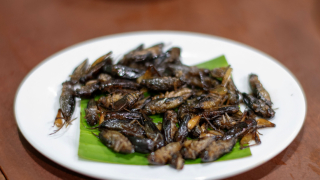 Insect Eating in Japan: Where to Find Them