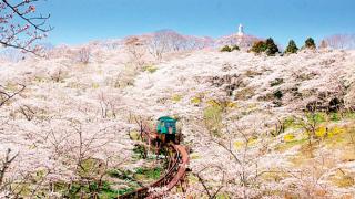 Những điểm ngắm hoa anh đào đẹp nhất ở Nhật – Vùng phía Đông Bắc Tohoku