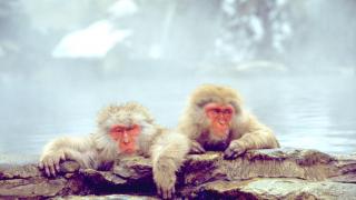 Cùng Japankuru tìm hiểu những điểm du lịch hấp dẫn vào mùa đông của Nhật Bản