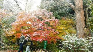 야마가타현 장기마을 텐도시의 단풍