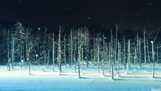 【再見日本】北海道:美瑛絕景  白金青池