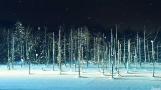 Hokkaido - Shirogane Aoi Ike (Shirogane Blue Pond/白金青い池) - A Biei Beauty Spot