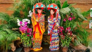 일본 가을여행! 오키나와에서 단풍놀이 가능하다? 불가능하다?