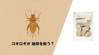 Can We Save the World by Eating Crickets? Japanese Retailer Muji Is Trying!
