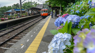 จุดชมดอกไฮเดรนเยียที่สวยที่สุดในญี่ปุ่น - ฤดูร้อน 2020