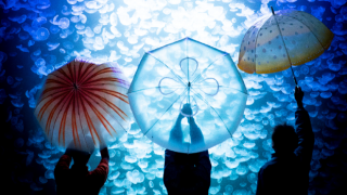 5 Best Umbrellas for Surviving Rainy Season in Japan