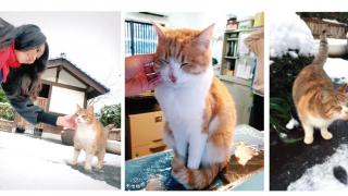 日本中部最療癒之所?貓控貓奴必訪隱藏景點:御誕生寺