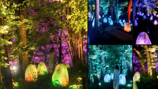 New teamLab Destination in Saitama! An Acorn Forest at the Kadokawa Culture Museum