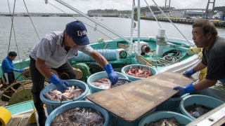 [Just what is Joban-mono fish?] Pt. 5 Real-Life Fisheries, Seafood, and Safety Testing in Soma, Fukushima