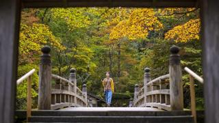 東京出發日本秋日旅遊推薦  栃木賞楓紅葉秘境加經典景點8區盤點