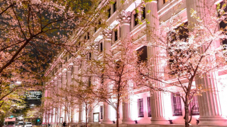 5 Nighttime Sakura Spots in Tokyo - Cherry Blossoms to Enjoy After a Busy Workday!