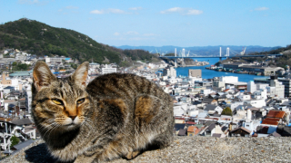 See Setouchi's Hiroshima and Ehime by Boat ・ Must-See Spots and Route Recommendations