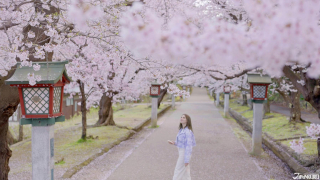 A JR EAST Train Trip to Tsubame-Sanjo ④: Spring Cherry Blossoms and Seasonal Sightseeing