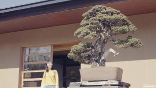 [사이타마현을 즐기는 색다른 여행찾기] 05. 분재 체험