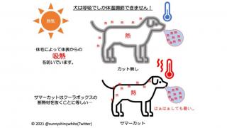 여름철 반려견 미용, 짧게 깎으면 더 덥다? 일본 전문가의 조언
