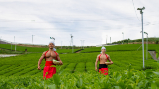 Muscular Japanese Men Pick Tea and Frolic in Tea Fields, All Available as Free Stock...