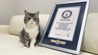 Japanese Cat Motimaru Named the Most Watched Feline on YouTube ・ Have You Seen His Videos...