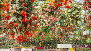 Secrets of San'in | Explore a Magical World of Flowers and Birds in the San'in City of...