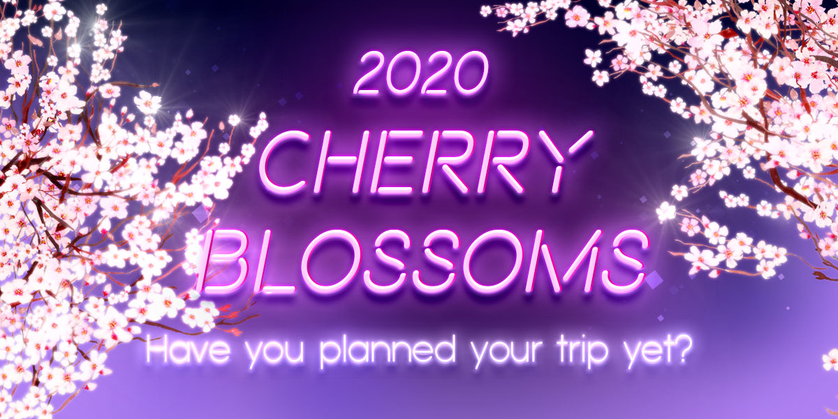 Cherry Blossoms 2020